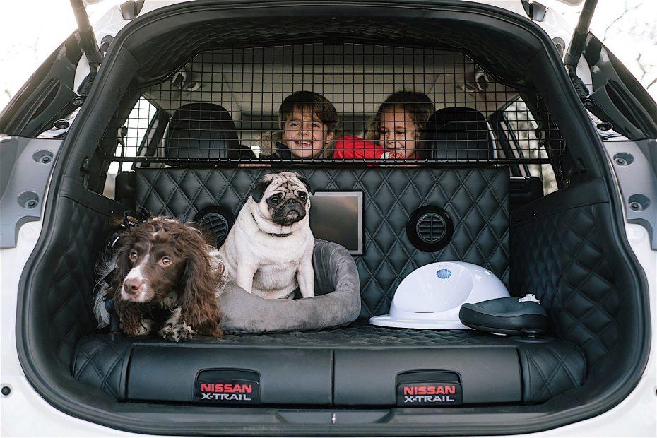 Perros con arnés colocados en la maleta de un auto sujetos