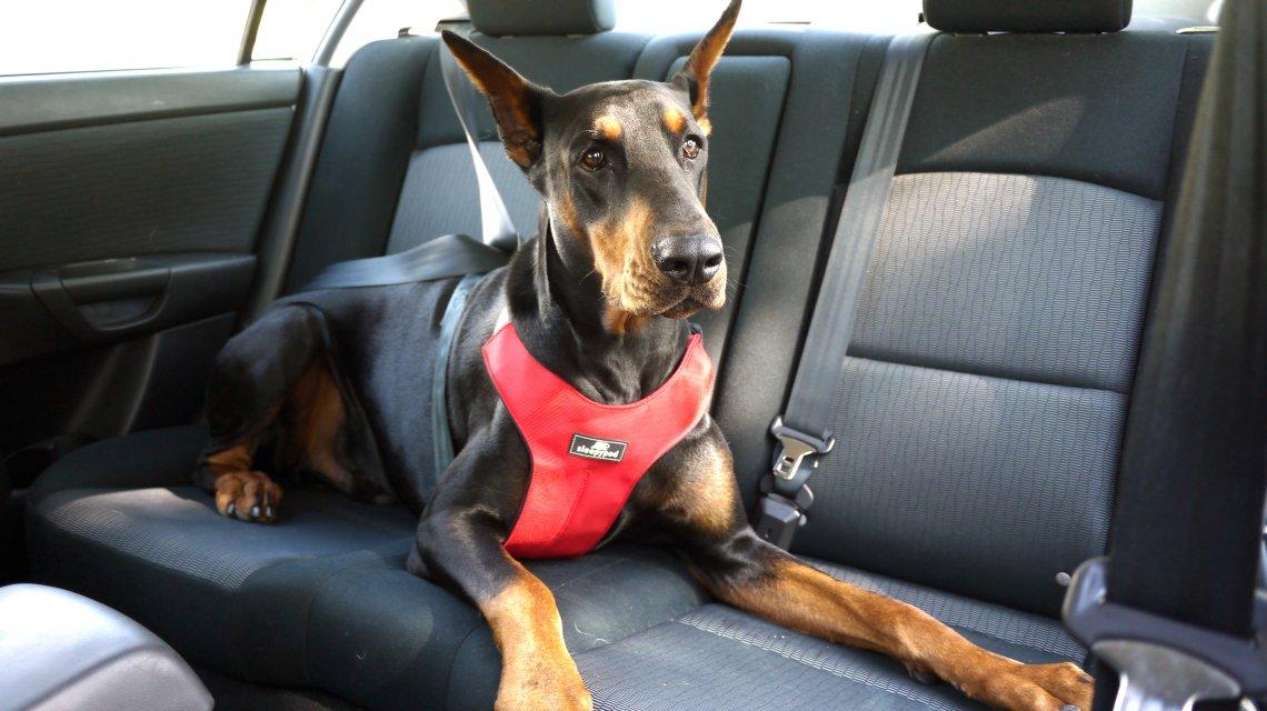 Ley Tenencia Responsable de Mascotas en Chile 2019