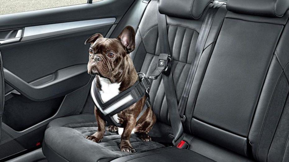 Como transportar animales en un vehículo de manera segura
