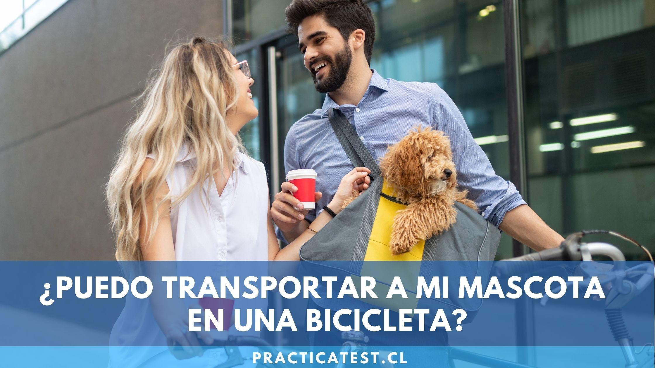 Cómo realizar el transporte de una mascota en bicicleta evitando posibles multas